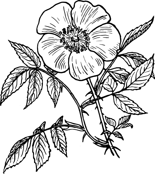Red Flower Line Drawing : Coloriage adulte fleurs